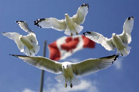 Kanada'da Eğitim Fırsatı
