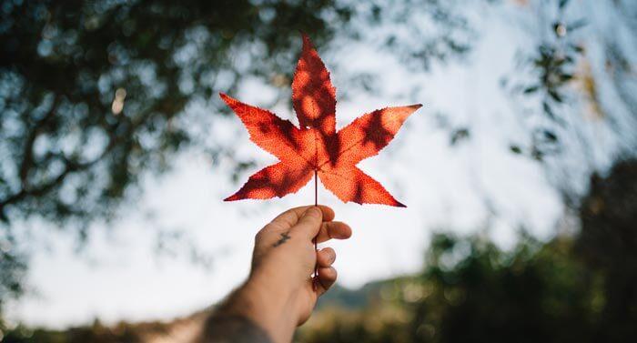 Kanada Dil Okulları Fiyat Listesi