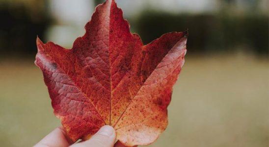 Kanada Dil Okulu Avantajları Nelerdir?