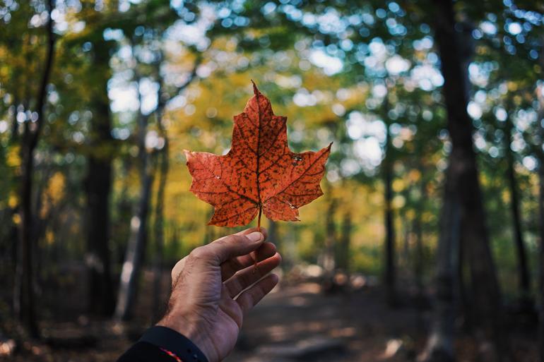 Kanada Dil Okulları ile Geleceğinizin Önünü Açın